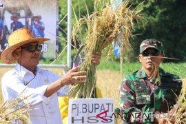 Petani HSS panen padi di lahan 350 hektare