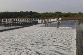 Madura Panen Garam, Harganya di Probolinggo Merosot
