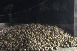 Perusda diminta realisasikan rencana tampung kopra petani
