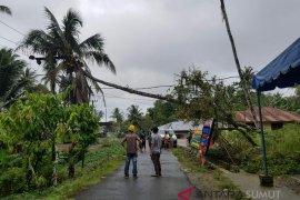 Sejumlah jaringan PLN rusak tertimpa pohon