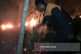 Hutan Jati di Situbondo Diduga Dibakar (Video)