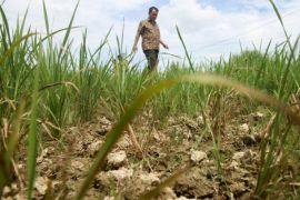 Kemarau sebabkan 4.000 Ha lahan sawah di Aceh Barat gagal  tanam