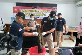 Polisi buru jaringan sindikat perdagangan kulit harimau
