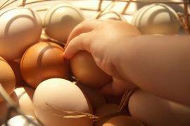Polisi gagalkan penyeludupan telur dari Malaysia
