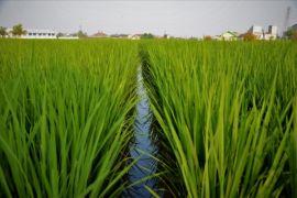 Hari Pangan Se-Dunia, enam pemulia tanaman terima penghargaan