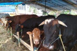 Pemkot Sukabumi latih calon penyembelih hewan kurban