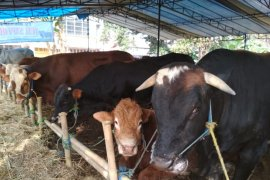 Penjual kurban wajib miliki surat kesehatan hewan