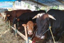 Kebutuhan hewan kurban di Sukabumi meningkat