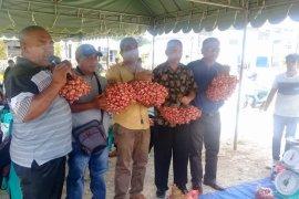 Distan Malra targetkan sentra hortikultura Maluku
