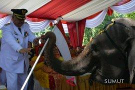 Dua ekor gajah tangkahan meriahkan hari kemerdekaan