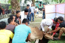 PTPN IV Qurbankan 14 Sapi dan Satu dari Holding Perkebunan Nusantara