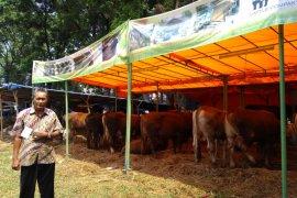 Wali Kota Bogor setujui rancangan surat edaran penjualan dan pemotongan hewan kurban