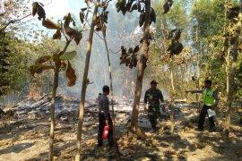 26 Kambing Etawa di Bojonegoro Hangus Terbakar