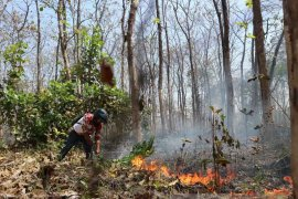 Hutan Kecamatan Parengan Tuban Acapkali Terbakar