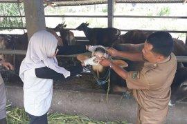 Puskeswan Curup pantau penyembelihan hewan kurban
