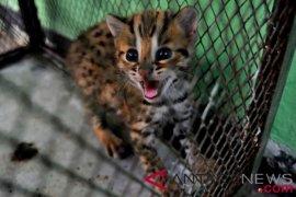 Peneliti IPB ciptakan alat pengusir kucing