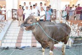 Pemkab Bangli bantu hewan kurban