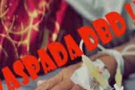 Kasus DBD di Pekanbaru, Riau capai 417