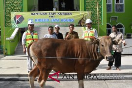 Kideco bagikan 111 ekor sapi qurban