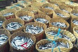 Nelayan Sukabumi panen raya tongkol dan lisong
