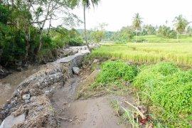 Sawah warga terancam akibat tanggul penahan banjir jebol