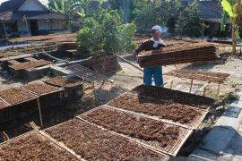 Bojonegoro Belum Garap Daerah Miliki Potensi Tembakau