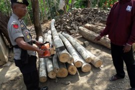 Petugas Amankan Tersangka Kayu Ilegal di Ponorogo