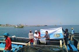 Nelayan Probolinggo Budi Daya Ikan Kerapu dengan Keramba Laut