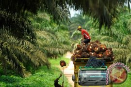 Terdampak COVID-19, pabrik sawit di Bengkulu PHK 50 karyawan