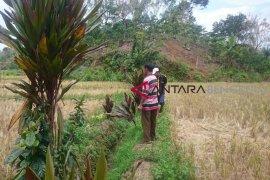 Komisi II segera tinjau sawah terancam kekeringan di Rejang Lebong