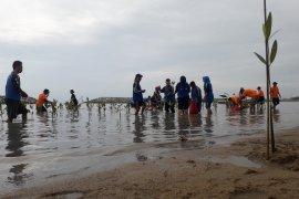 Relawan penanggulangan bencana Babel tanam 1.500 mangrove