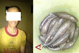 Tangkap penyetrum ikan Pemkab HSS akan berikan hadiah Rp3 Juta