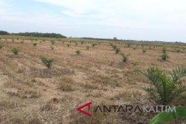 Alih fungsi lahan pertanian di Penajam sulit dibendung