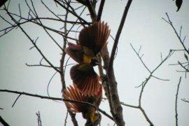 Aktivis serukan pelestarian burung endemik Raja Ampat