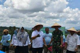 Angkola Julu potensi agrowisata Padangsidimpuan