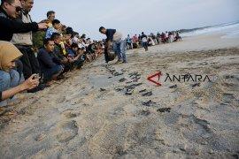 Wisata edukasi penangkaran konservasi Penyu