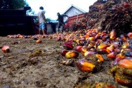 Pembangunan pabrik sawit ditolak petani, Gubernur bingung !!