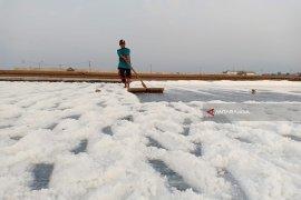Petani Probolinggo keluhkan anjloknya harga garam
