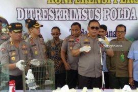 Terancam Mati, Tim BKSDA Cek Kondisi Ratusan Burung Langka di Jember