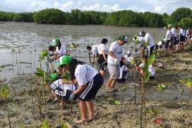 JBT tanam ribuan bibit pohon bakau
