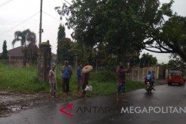 Hujan deras tumbangkan pohon besar
