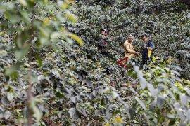 Wakil Ketua DPRD Jabar: Kopi tatar Sunda harus mendunia
