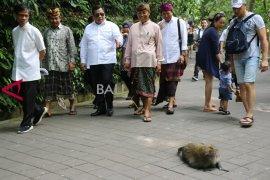 DPR: monkey forest Ubud itu keajaiban