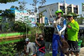 Tree care society plant 300 galam to green Trans Kalimantan