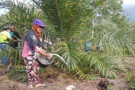 Pemkab Sintang targetkan lahan sawit 200 ribu hektare untuk perusahaan