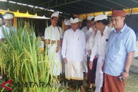 Dinas Pertanian Tabanan apresiasi petani gunakan pupuk organik