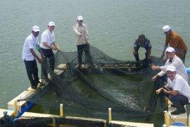 Nelayan Pulau Sembilan dapat bantuan bibit ikan kerapu