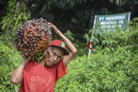 Indonesia resmi gugat Uni Eropa ke WTO soal sawit