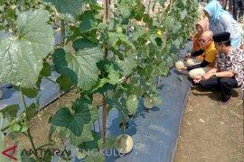 Bengkulu Selatan genjot penggunaan pupuk organik