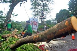 Bupati Banjarnegara imbau pangkas pohon secara berkala